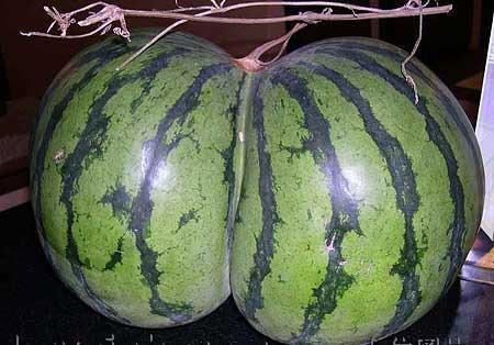 ass shaped watermelon